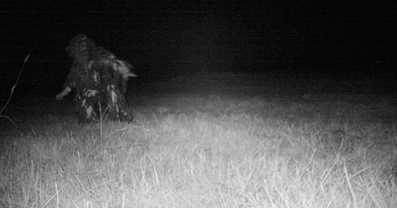 Policía rastrea a un puma y encuentra algo espeluznante