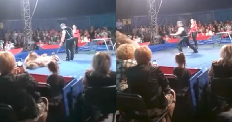 Oso Pardo se enfurece y ataca al público en el circo