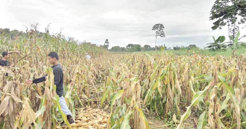 Campesinos de la UNTA tomaron oficinas de SAGARPA