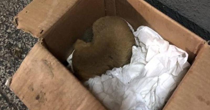 Emotivo video viral: así rescataron a una perrita enterrada entre basura