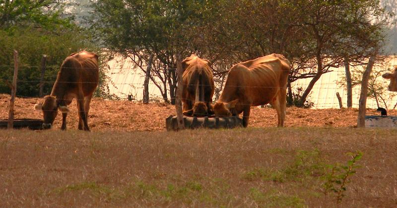 van 120 muertes de reses en la vía corta expreso