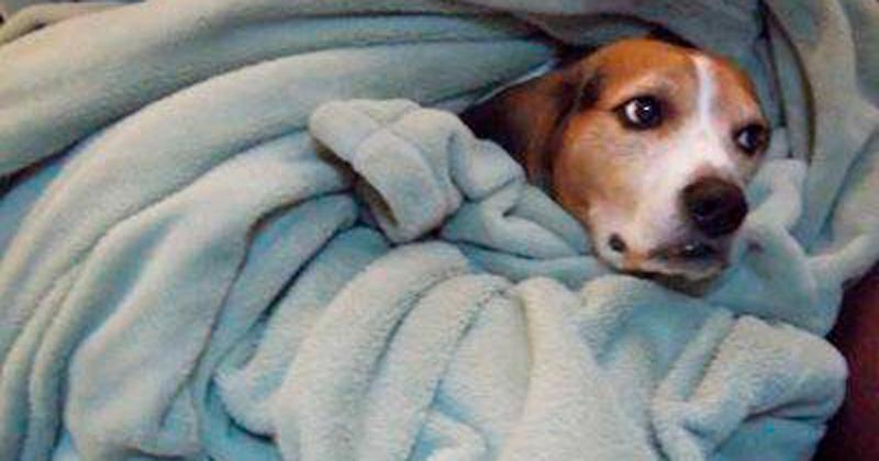 tips para proteger a tu mascota del frío expreso expreso