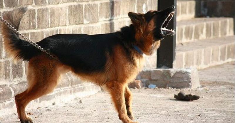 Hombre desaparecido en EU fue devorado por sus perros — Misterio resuelto