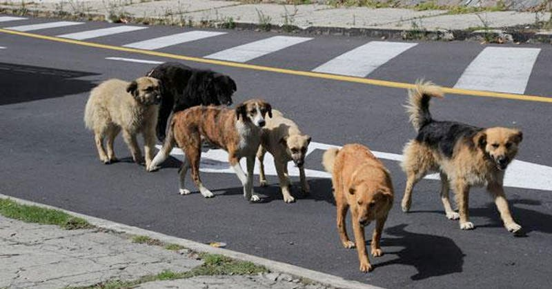 Busca Altamira tener un Centro de Control Animal - Expreso